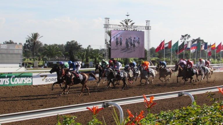 Pure-bred Arabians take centre stage on the Sunday of the Meeting International du Maroc at Casablanca's Anfa each November