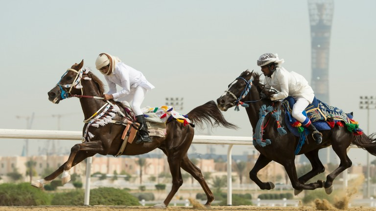 Local horses race each other at Al Rayyan racecourse in Doha