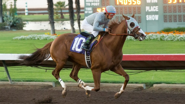 California Chrome lit up the tote boards at Los Alamitos in December 2016, but when the sun goes down and the floodlights come on, it's the quarter horses who take centre stage