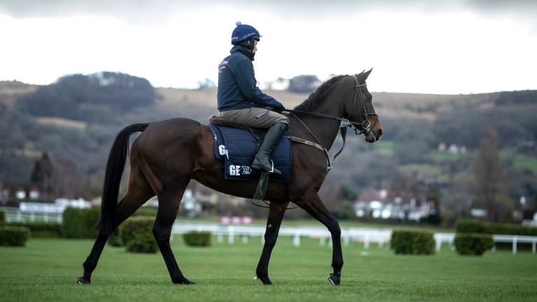 Apple's Jade stretches her legs on the gallops