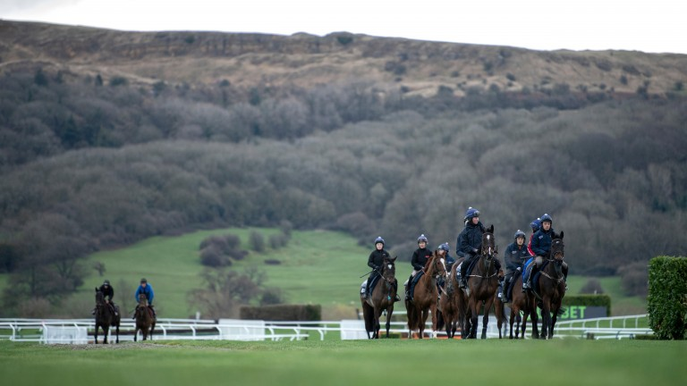 Apple's Jade (right) leads Gordon Elliott's string at Cheltenham on Sunday morning