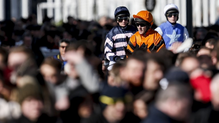 Which horses have the pedigree to prevail at Prestbury Park?