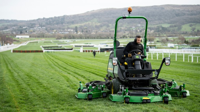 Cheltenham's hurdle and chase courses are predominantly soft