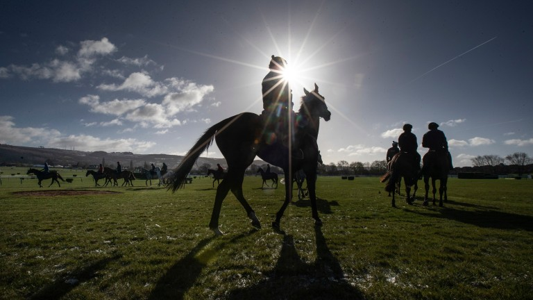 A bright start to the morning as Willie Mullin's string begin their warm up routine.CheltenhamPhoto: Patrick McCann/Racing Post 11.03.2019