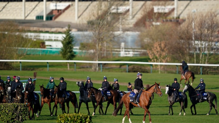A number of horses currently trained by Gordon Elliott hold Cheltenham Festival entries