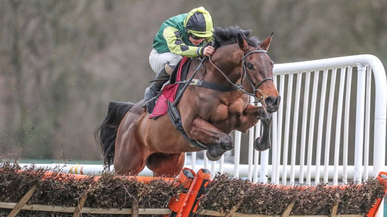 Lisnagar Oscar: could provide Sean Bowen with a first Cheltenham Festival winner