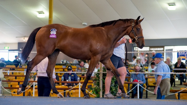 Lot 157: Dundeel - Swan River filly
