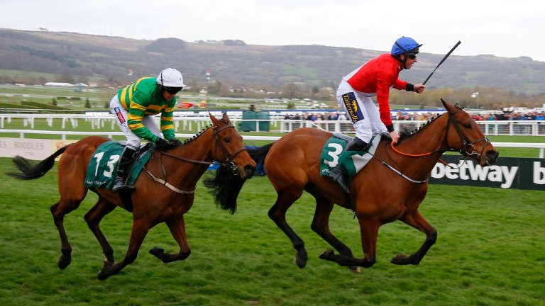 Envoi Allen (right): unbeaten in seven starts, including the Champion Bumper