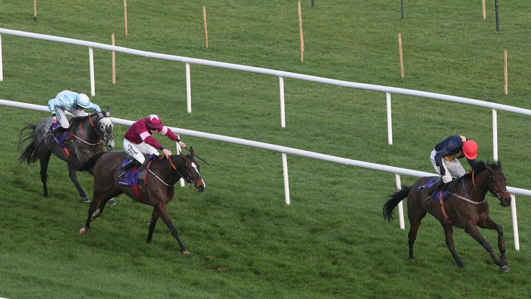 Dallas Des Pictons chasing home City Island at Leopardstown last season