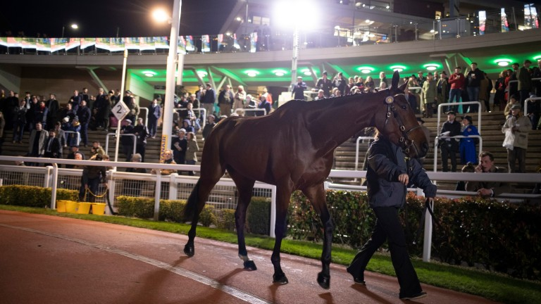 Stowaway filly My Whirlwind will join Nicky Henderson for £400,000