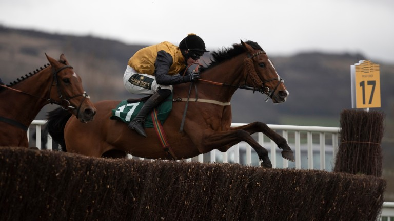 Croco Bay: seven-time winner from 45 starts