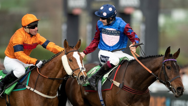 Sam Spinner (left) provided a rare high point for British breeding at this year's Cheltenham Festival when a gallant second in the Stayers' Hurdle