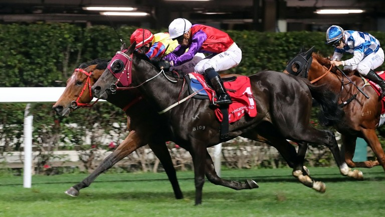Encouraging (near) dead-heats with Magnificent at Happy Valley last month