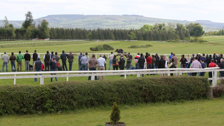 Potential buyers keep their eyes on the action as a two-year-old breezes