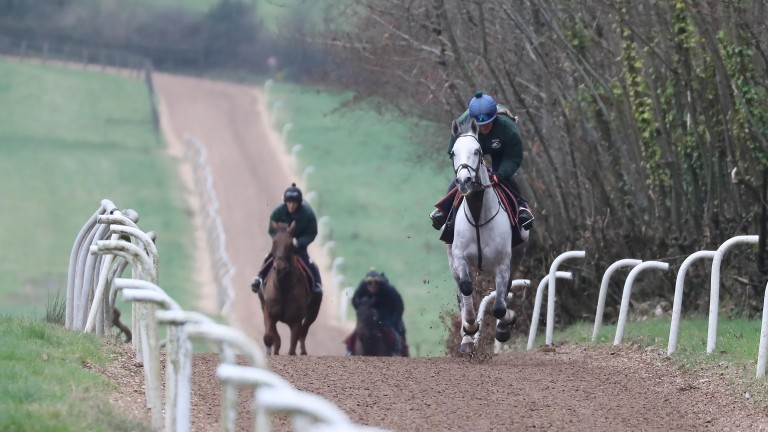 Ramses De Teillee comes up the gallops under Rosie Clark as he prepares for the Grand National