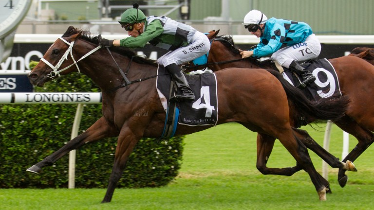 Golden Slipper Stakes fancy Yes Yes Yes