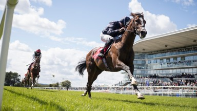 Amedeo Modigliani: set for first outing since maiden victory at the Galway festival in August 2017