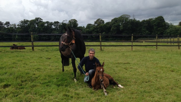Robert Robinson has developed a thriving National Hunt stud in Annan