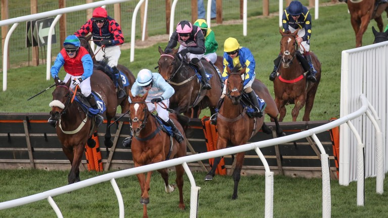 Winston C (Sean Bowen, yellow cap) is only third at the last but gets up to beat Champagne City (light blue) by a nose