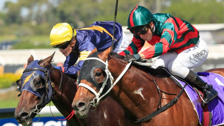 The Autumn Sun (near side) battles bravely to win the Rosehill Guineas