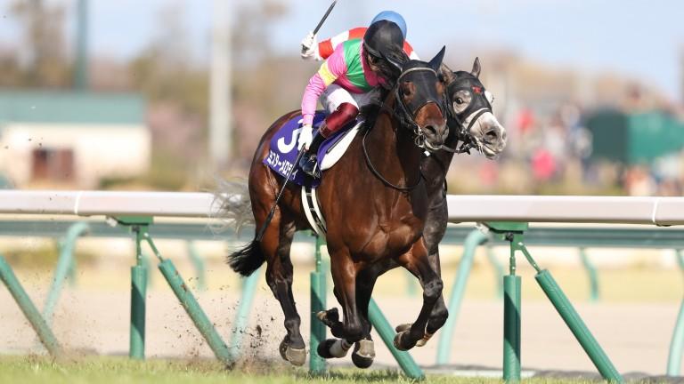 Mr Melody: winner of the Takamatsunomiya Kinen