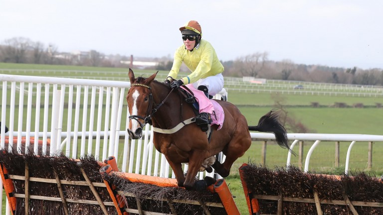 Captain Zebo: bred to stay this sort of distance