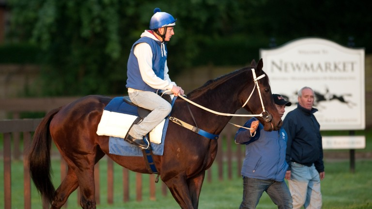 Black Caviar and Paddy Bell make their way to the Al Bahathri