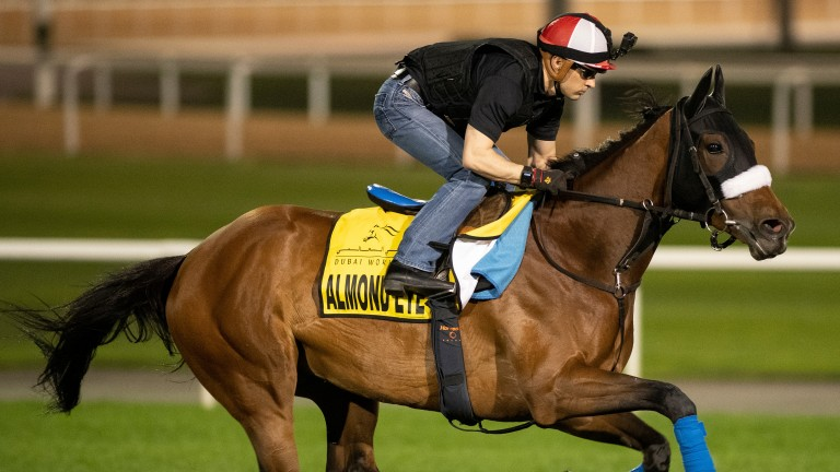 Almond Eye: potential star of the show on World Cup night in the Dubai Turf