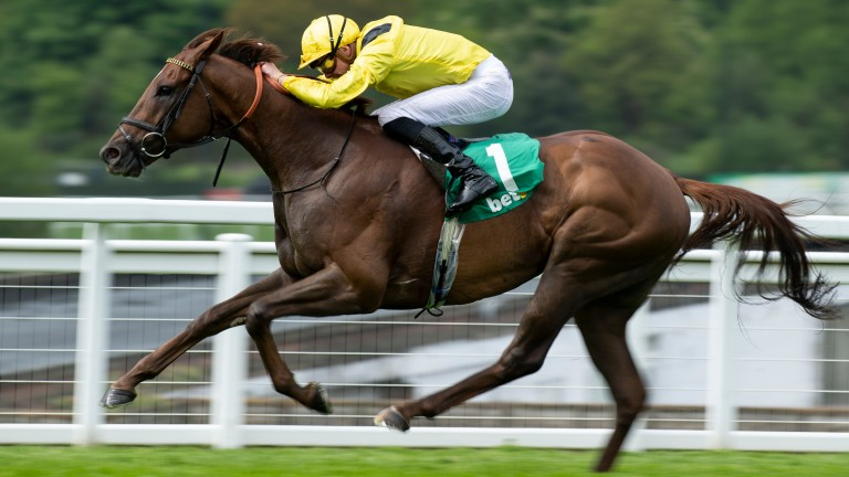 Addeybb: showed his best form when winning the Lincoln first time out last year