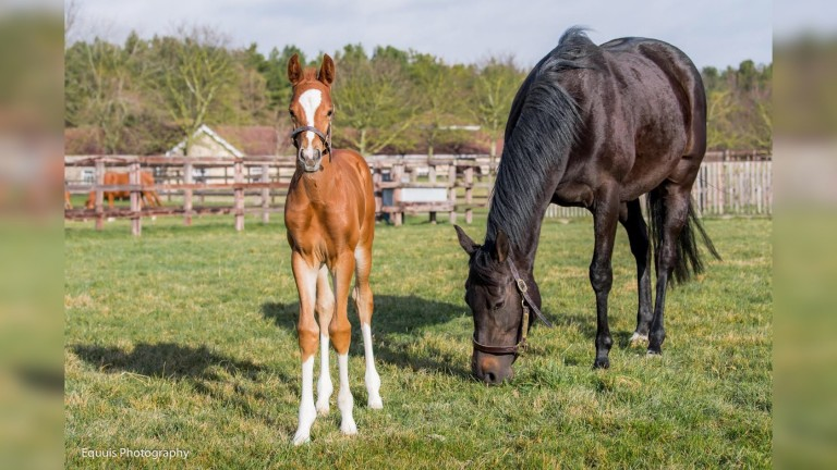 Shaden with her Decorated Knight colt