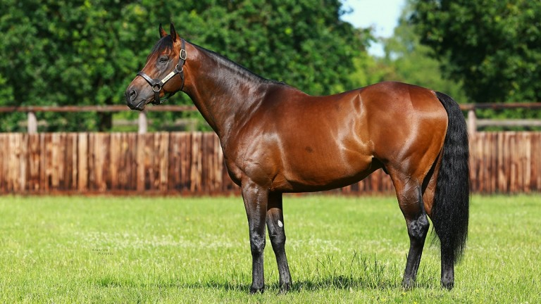 Wild Animal is a son of Kingman, pictured here at stud
