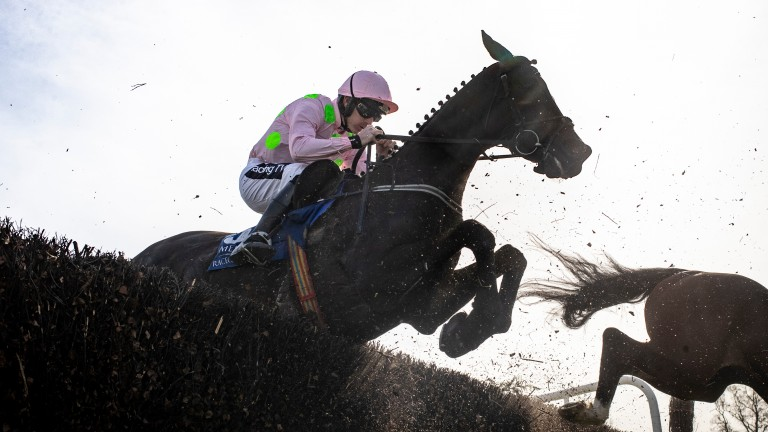 Burrows Saint: one of seven runners for the champion trainer and the choice of Ruby Walsh
