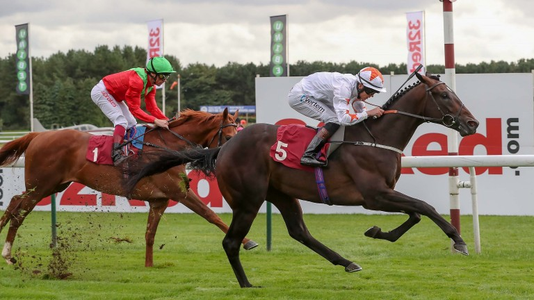 Kadar: entered in two races at Newmarket this week