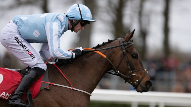 Minella Melody: held in high regard by trainer Henry de Bromhead