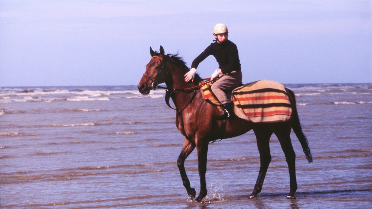 National Hunt Horse RacingRed Rum relaxes in the sea on Southport beach prior to the 1980 Grand National