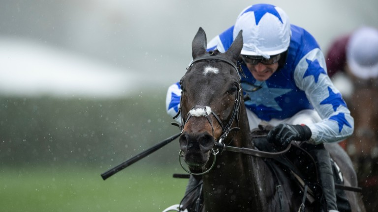 Kemboy: favourite for the Punchestown Gold Cup