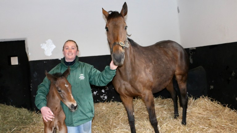 Quevega: star mare's first foal Princess Vega made a winning debut