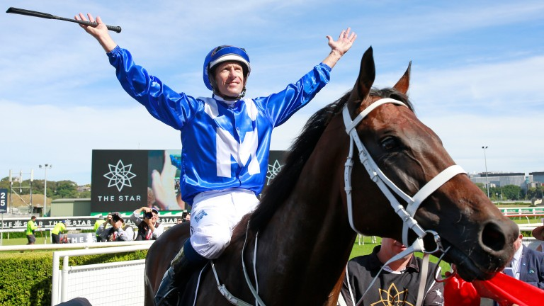 Winx: lost her first foal by I Am Invincible