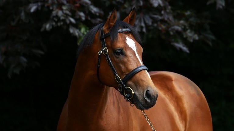 Gleneagles: has made a flying start to his stallion career