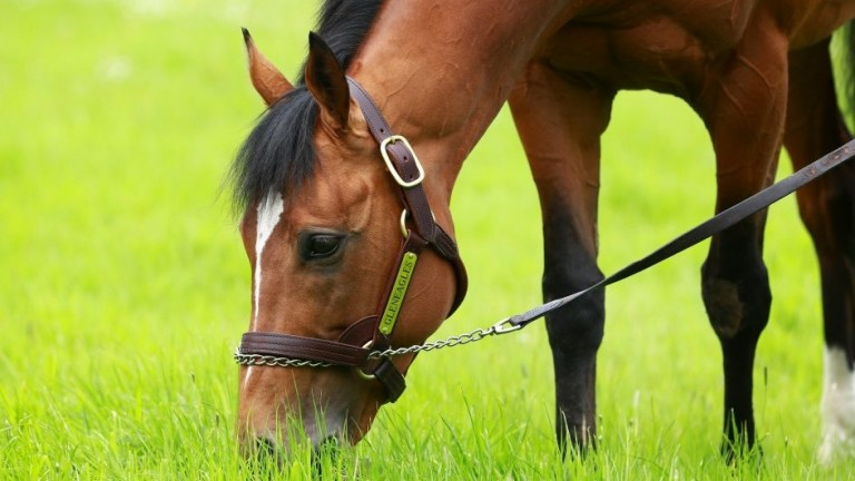 Gleneagles: his full-sister runs at the Curragh on Monday