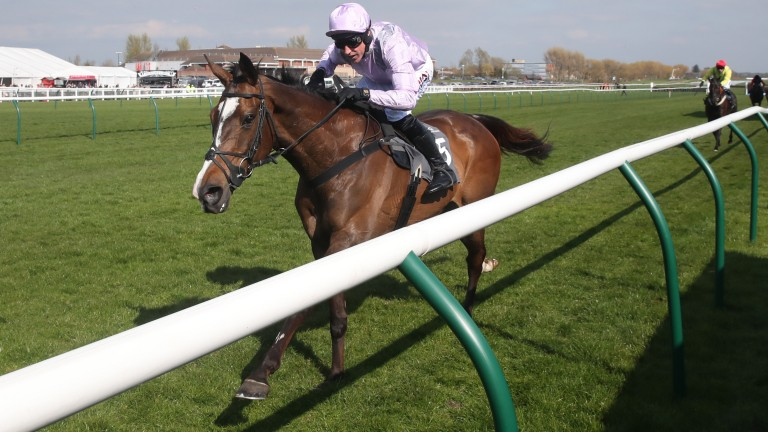 Born Survivor: one to watch if taking up his engagement at Newbury on Saturday