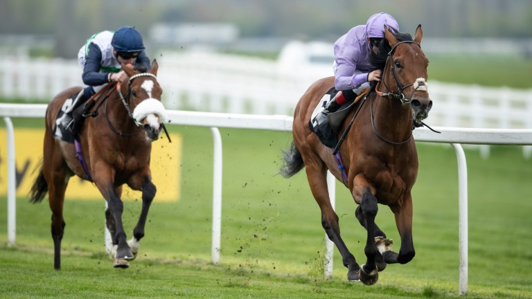 King Ottokar: puts his Derby credentials on the line at Chester