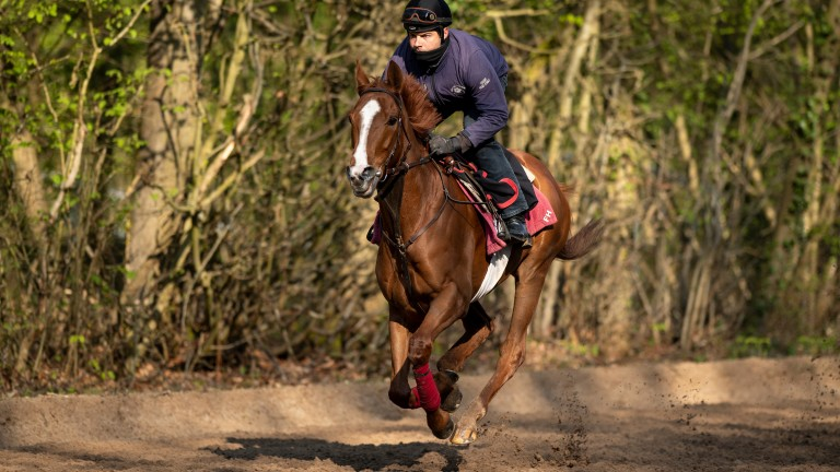 Call The Wind has done well since returning from his third-placed effort in the Dubai Gold Cup and remains an exciting prospect over staying distances