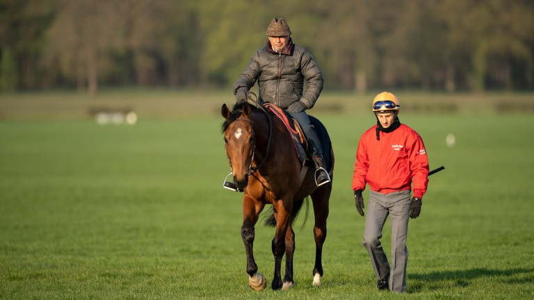 Freddy Head on his hack with stable jockey Aurelien Lemaitre on les Aigles gallops in Chantilly last week