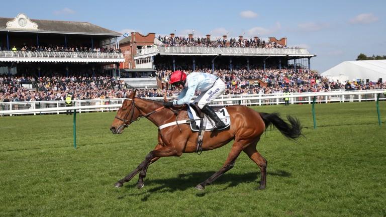 Verdana Blue: County Hurdle fancy wasn't entered in the race