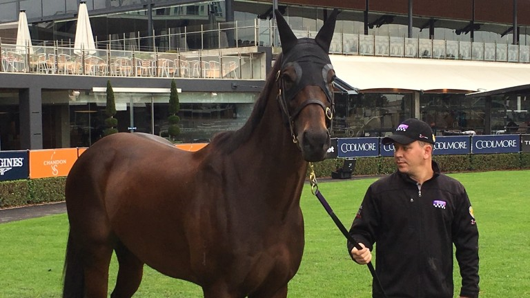 Winx poses with strapper Umut Odemislioglu at Rosehill on Sunday