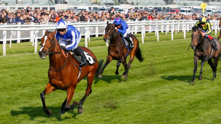 Migration (centre) chases home impressive winner Fox Chairman at Newbury on Saturday