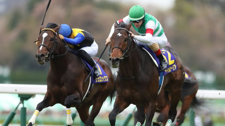 Saturnalia winning last season's 2,000 Guineas: the Takarazuka Kinen is on the agenda while an Arc bid could be on the cards for the 4yo