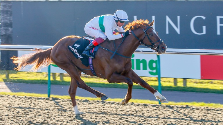 Wissahickon: returns to action in the Strensall Stakes