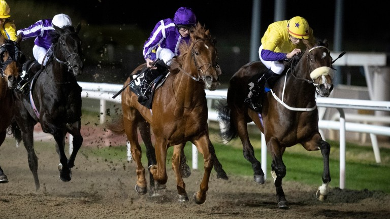 Western Australia (purple cap): second on seasonal reappearance at Dundalk